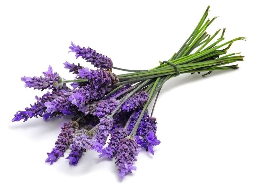 Lavender Herb Flower Pack 30 Seeds Seedsnpots Com