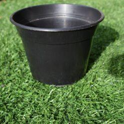 Round plastic 3.5 inch pots