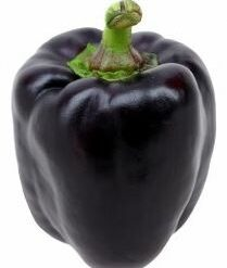 Capsicum black purple
