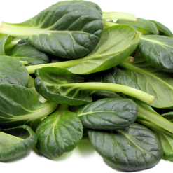 Tatsoi Green asia herb seeds
