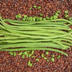 Cowpeas Seeds
