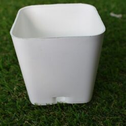 white square pots