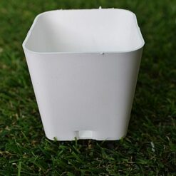 white square pots