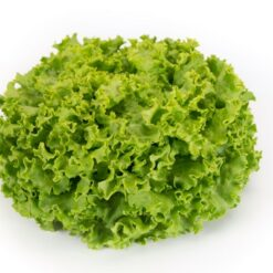 lettuce batavia